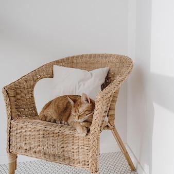 Рыжий кот спит на стуле из ротанга с подушкой.
