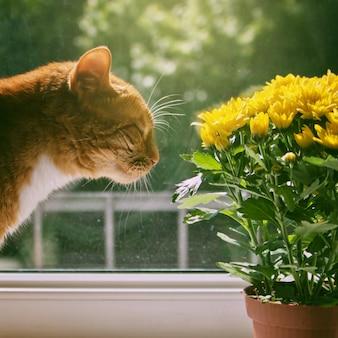 美しい花の香りがする赤猫