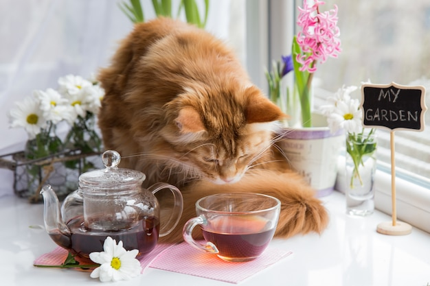 Red cat sniffing  mug of tea while standing on a table