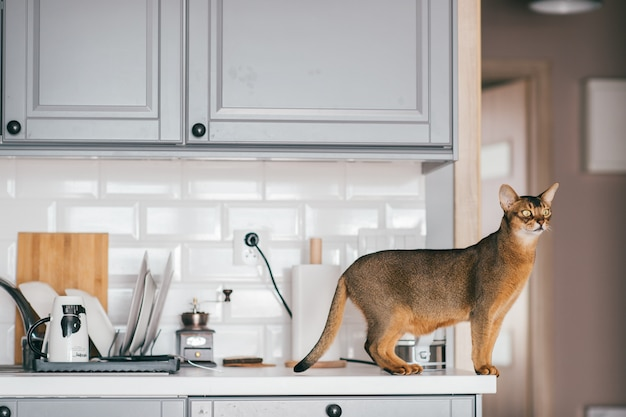 Red cat standing on table with kitechenware.