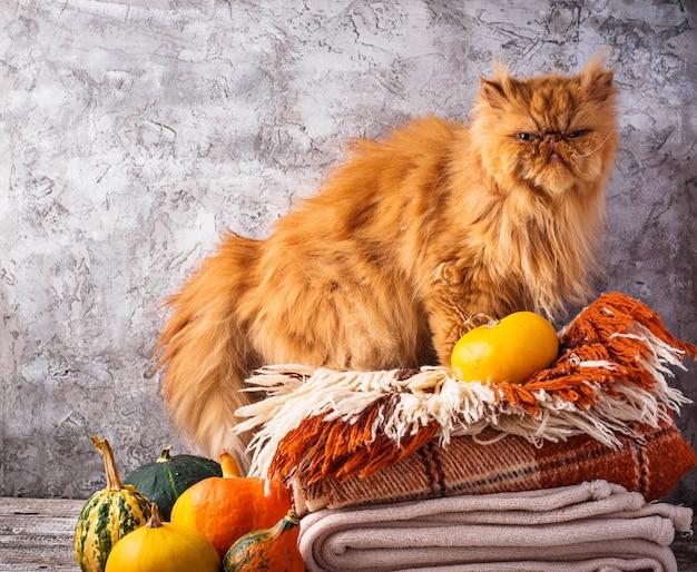 Рыжий кот стоит на стопке пледов
