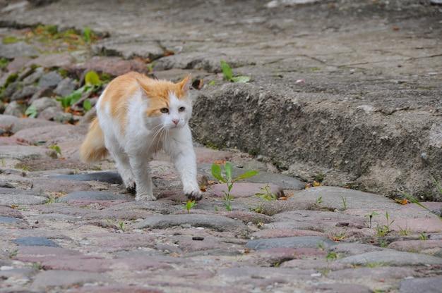 Рыжий кот уходит по пустой улице