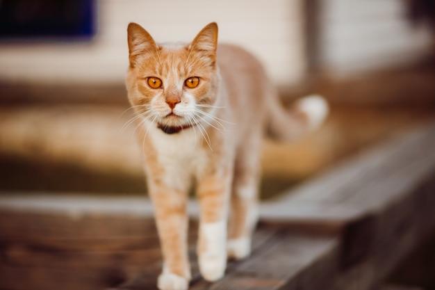 赤い猫は木製の柵で歩く