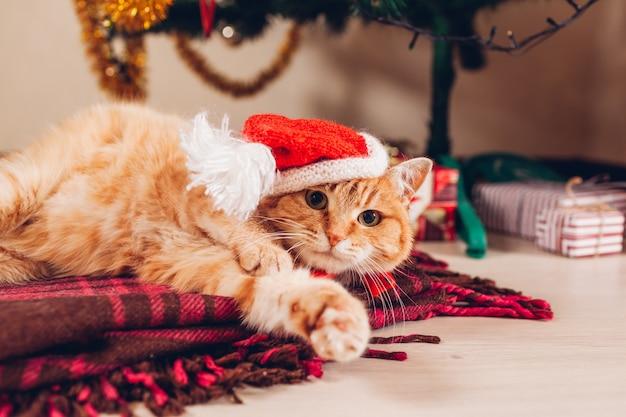 赤い猫はクリスマスツリーの下に横たわっているサンタの帽子をかぶっています。