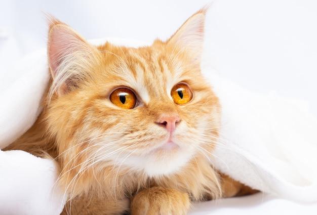 白い毛布の下に大きなオレンジ色の目を持つ赤い猫