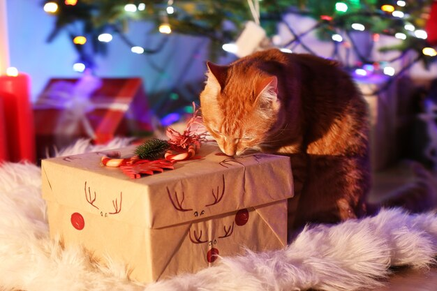 Red cat with christmas gift
