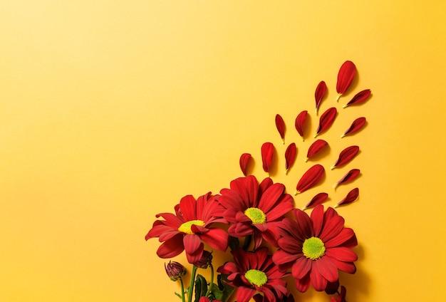 黄色い表面に赤い菊のクローズアップ