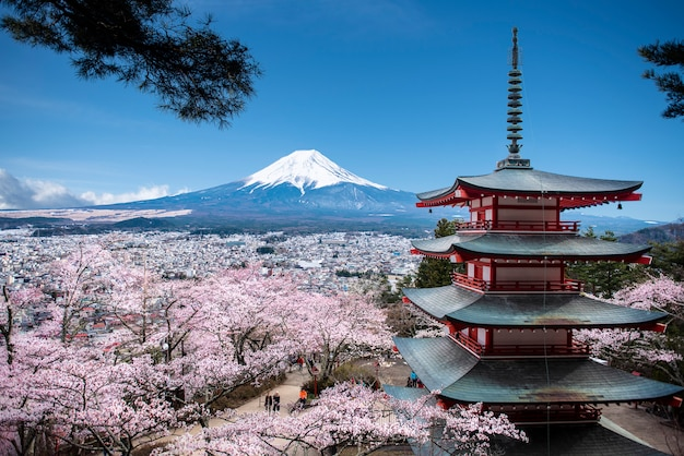 Red chureito pagoda and mt. fuji background in the spring with cherry blossoms