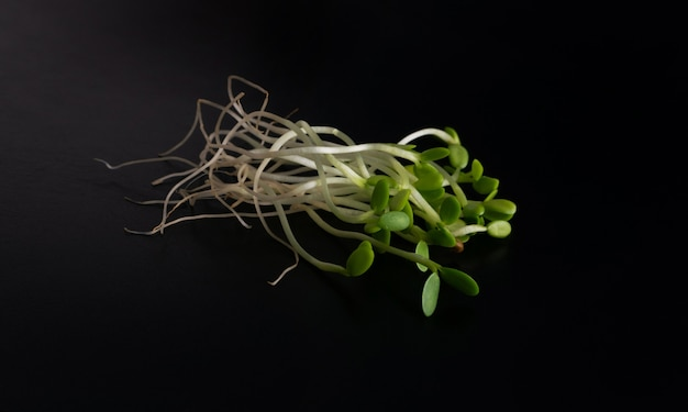 레드 클로버 콩나물, 루체른 및 무 콩나물 격리 된 평면도. 원시 다이어트 식품에 대한 발아 야채 씨앗, 마이크로 녹색 건강한 식생활 개념