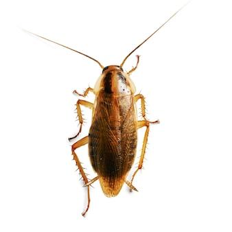 빨간 바퀴벌레 매크로 절연