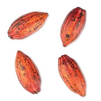 흰색 위에 절연 레드 코코아 과일