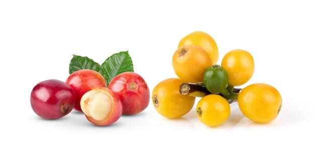 赤いコーヒー豆は、白い背景で隔離の熟した未熟な果実。完全な被写界深度