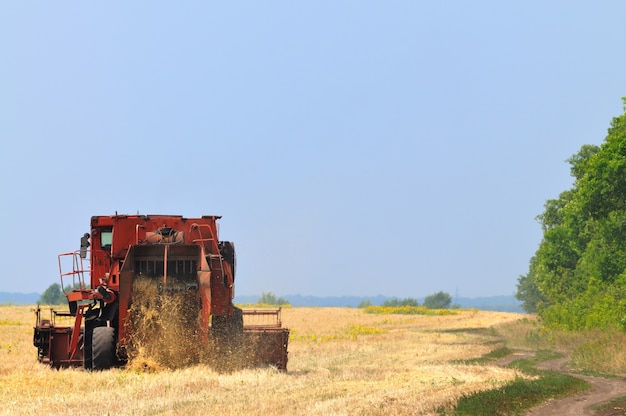 화창한 여름 맑은 날에 밀밭에서 일하는 레드 결합 수확기. 농업 자연 배경 및 벽지