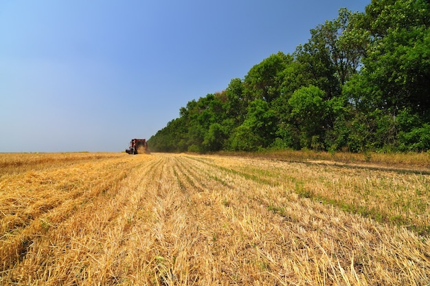 Красный комбайн работает на пшеничном поле в солнечный летний ясный день