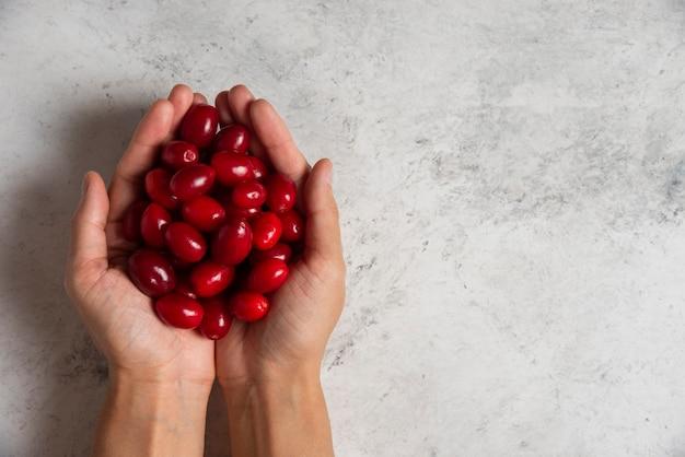 손에 빨간 산딸 나무.