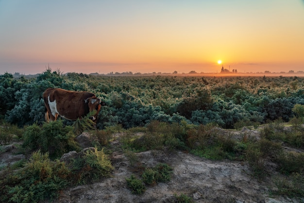 Красная корова на зеленом поле