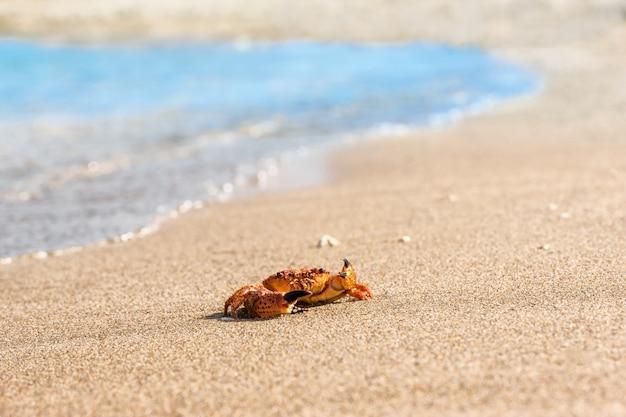 해변에 빨간 게