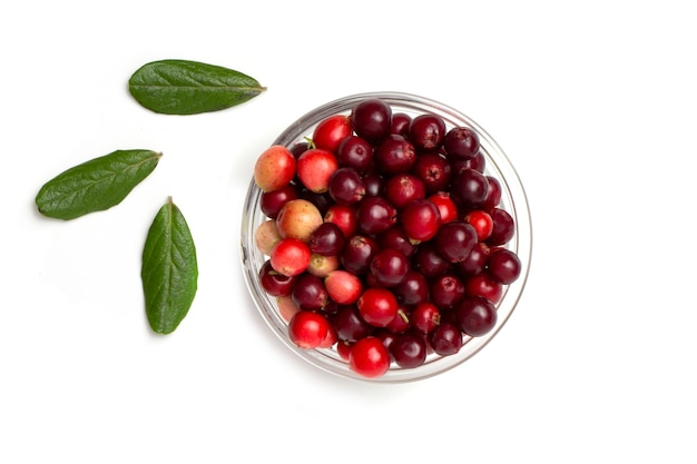 Red cranberry berry with green leaves in a transparent bowl isolated on a white background.