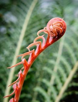 赤いカールした植物のクローズアップ