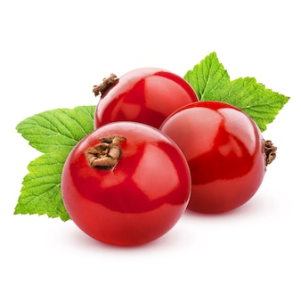 Red currant isolated on white with clipping path