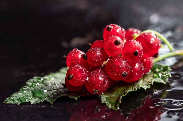 Red currant  and leaf with drops of water on black