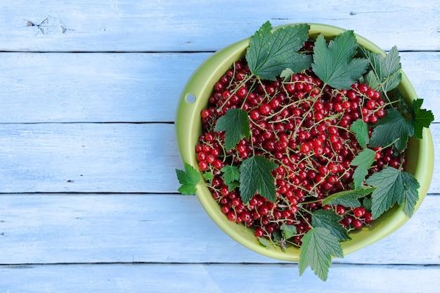 緑のボウルに葉と赤スグリ