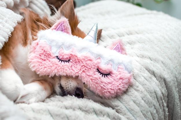 분홍색 마스크를 쓰고 흰색 격자무늬로 자고 있는 빨간 귀여운 강아지. 확대. 초상화. 컨셉 주말