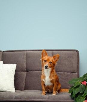 ソファに座っている赤いかわいい小さな犬