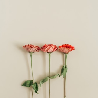 Red cynicism flowers on beige surface
