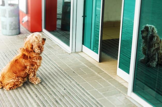 Красная собака ждет хозяина за дверью магазина