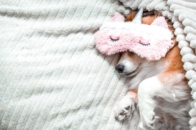 잠을 위해 분홍색 마스크를 쓰고 침대에 누워 있는 빨간 개. 개념 아침입니다. 컨셉 주말. 컨셉 바캉스