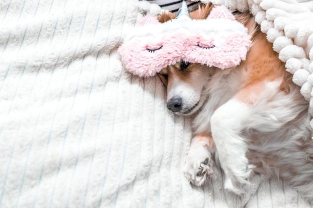 잠을 위해 분홍색 마스크를 쓰고 침대에 누워 있는 빨간 개. 컨셉모닝