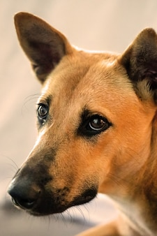 Red dog mongrel looks, close-up, portrait, vertical photography