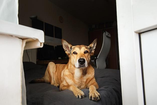 Рыжий пес отдыхает на кровати возле балкона