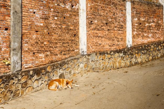 Red dog sleeps