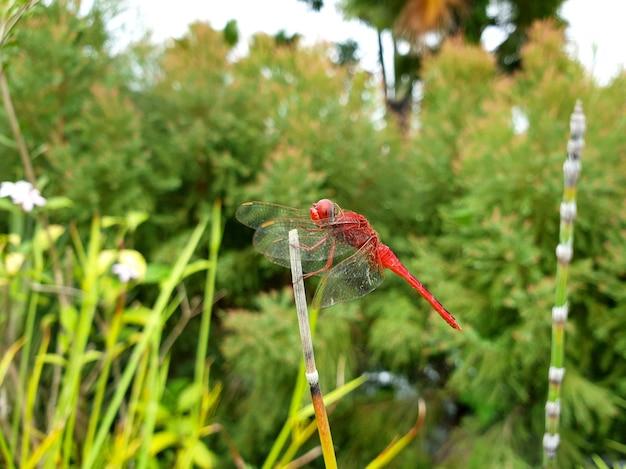 공공 정원의 붉은 잠자리