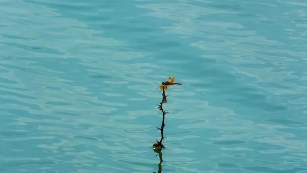 Красная стрекоза в воде