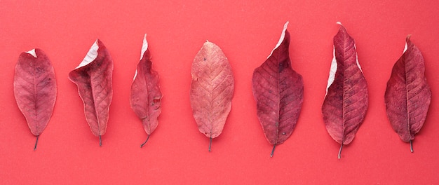 Red dried cherry leaves in a row on a red background
