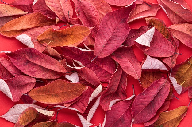 Red dry autumn cherry leaves on a red background. autumn has come, abstract autumn background