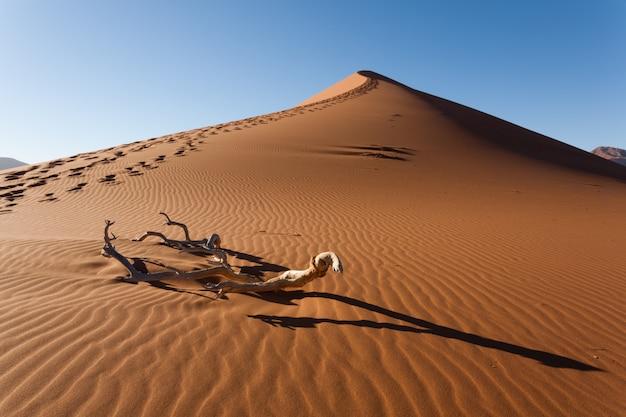 カラハリ砂漠、ソススフレイ、ナミビアの赤い砂丘