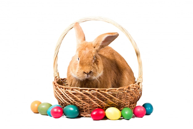 Red easter bunny in a basket with eggs, isolate, preparation for the holiday of easter