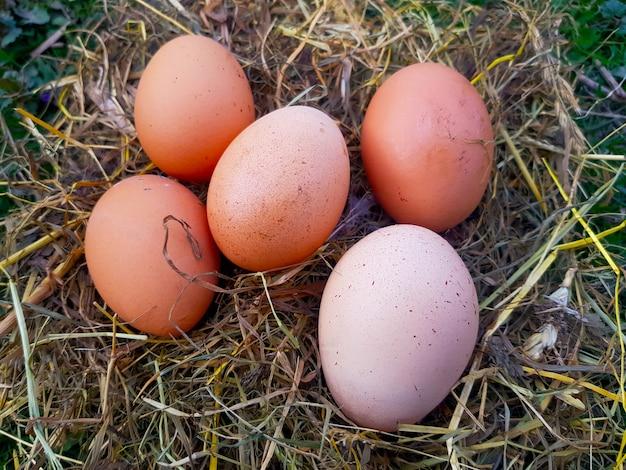Красные яйца в соломенном гнезде