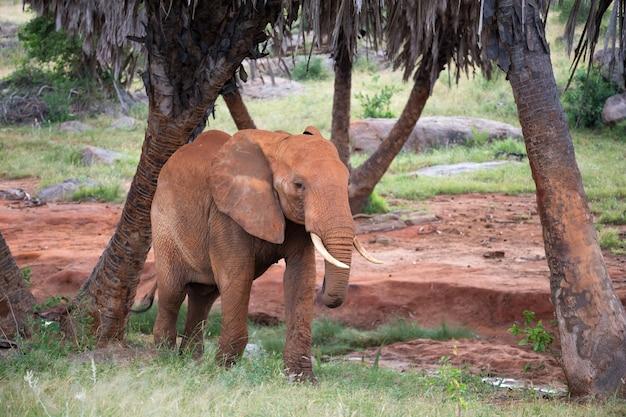 ヤシの木や木々の間を歩く赤い象