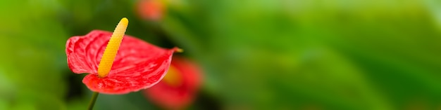 Red exotic flower on green background
