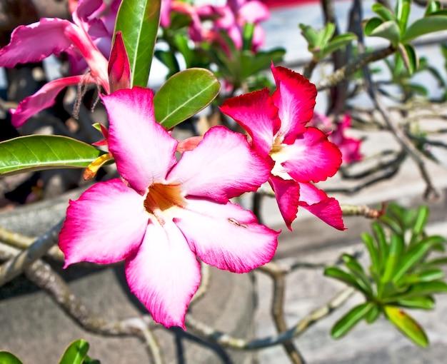 태국 방콕 왕궁 정원에 있는 붉은 이국적인 꽃