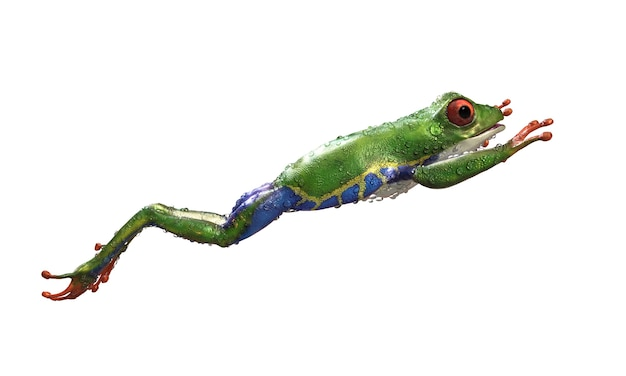 Red-eyed amazon tree frog a tropical rain forest animal with clipping path