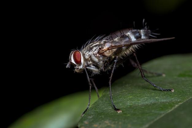 葉と黒い背景の赤い目のハエ