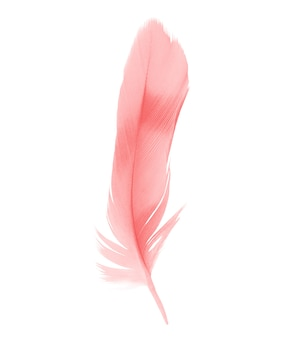 Red feather isolated on white background