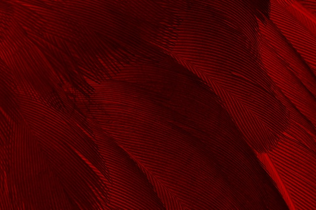 Red feather pattern texture background
