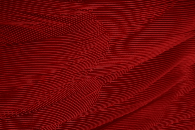 Red feather texture background